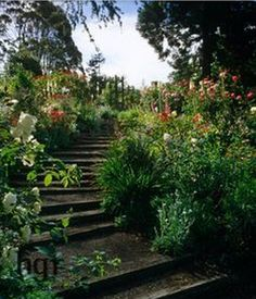 New Zealand garden with steps  http://harpurgardenimages.thirdlight.com/viewpicture.tlx?containerid=126624&pictureid=11747606