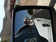 Corgis going for a ride