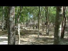 La ruina el Tabasqueño Hopelchen, Campeche los chenes - YouTube