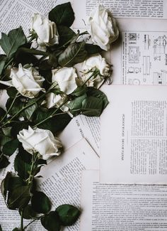 ▷ 1001 + images for a magic flower wallpaper - Iphone background images book pages and white roses wallpaper summer flowers - Flowers Wallpaper, Drawing Wallpaper, Wallpaper Pictures, Tumblr Wallpaper, Classy Wallpaper, White Roses Background, Background Vintage, Iphone Background Images, New Backgrounds