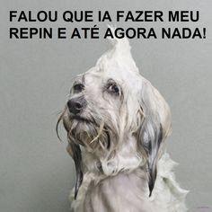 Vida de Cão!