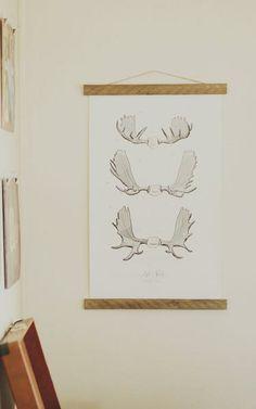 Moose Antler Study Vol. 1 www.mooreaseal.com