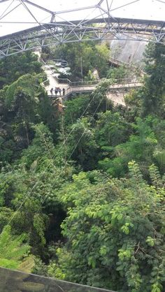 View from the roof on the rainforest Biome