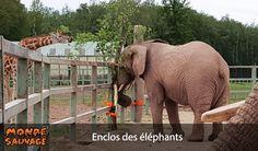 Enclos des éléphants et enrichissements.