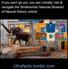 Washington D.C.'s National Museum of Natural History has a virtual tour of their museum that you can navigate with your desktop on their website. HERE's the link:...