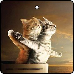 New scents just for you, Titanic Cats Car ...! Check it out here: http://freshcar.club/products/titanic-kittens-car-air-freshener?utm_campaign=social_autopilot&utm_source=pin&utm_medium=pin