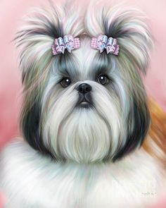 Stassi the Shih Tzu, Illustration by Catia Cho Stassi is owned and loved by Roxanne Tillotson