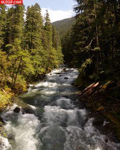 GIF: Agua del río fluyendo entre árboles