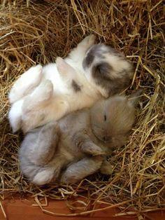 Sleeping baby bunnies | Animals