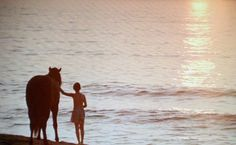 the black stallion ~ LOVED this movie as a little girl.tore my heart to shreds every time. want to watch it again. Beautiful Film, Beautiful Horses, Black Stallion Movie, Sight & Sound, My Happy Place, Cinematography, Google Images, Childhood Memories, Style Me