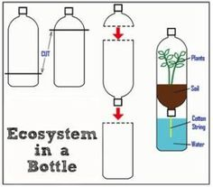 """Together all these living and non-living things interact with one another to create a system to sustain life. The term """"ecosystem"""" means an """"ecological"""" system.How to make a plant in the bottle: Illustration shows cutting the top of one bottl 4th Grade Science, Preschool Science, Middle School Science, Science Classroom, Teaching Science, Science For Kids, Earth Science, Science Activities, Science Penguin"""