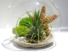 Terrarium Kit - Tide Pool - Hanging Terrarium with Air Plant - Beach Terrarium - Hanging Planter - Home and Living - Air Planter