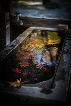 Autumn in Japan Vita Sackville West, Japon Tokyo, Japanese Maple, Foto Art, World Photography, Nihon, Japanese Culture, Wabi Sabi, Japan Travel