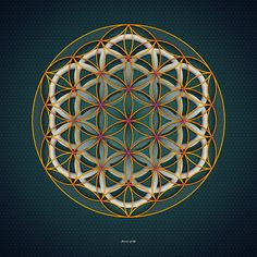 flower of life by NEDxfullMOon on DeviantArt