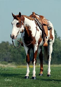 Wow! Paint, saddled and ready to go!