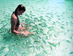 Ko Lanta, Thailand. I really did this with the fish there when I snorkled. They love bananas.