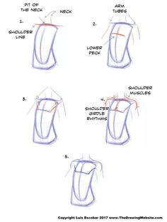 Cartoon Drawing Tips Cartoon Body FormulasThe Drawing Website Human Drawing, Gesture Drawing, Body Drawing, Figure Drawing, Drawing Heads, Learn Drawing, Drawing Reference Poses, Anatomy Reference, Drawing Tips