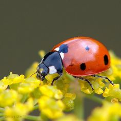 Forever finding ladybugs for my beautiful @Joana <3 <--- From my lovely @Girl Friday , she pretty, and awesome.