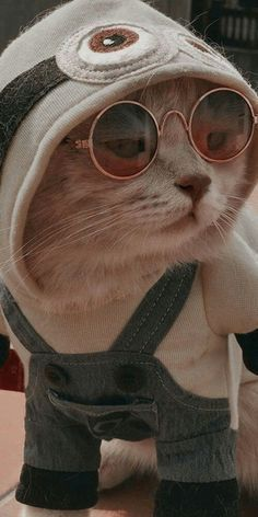 Here are some common behaviors your cat is likely to exhibit, and what it probably means when he's doing them. 7 Ways To Read Your Cat's Mood Cute Cat Memes, Cute Animal Memes, Cute Animal Photos, Cute Funny Animals, Funny Cats, Cute Baby Cats, Cute Cats And Dogs, Cute Little Animals, Cool Cats