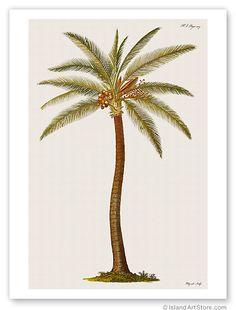Art Print Coconut Palm Tree Vintage Botanical Engraving | eBay