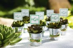 Favors - Fill silver pails with succulents surrounded with moss finishing with a decorative ribbon and twine.