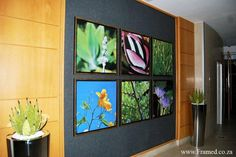 Botanical 'canvas' prints in entrance foyer, grouped together for effect.