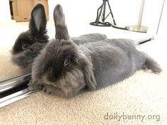 Bunny's in a perfect place to admire her cuteness - June 14, 2018