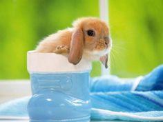 En kanin i en blå ting