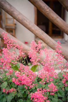 górskie kwiaty