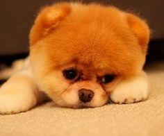 Aww. Puppy looks so sad!