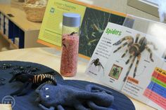 Learning about spiders is a fall favorite at our preschool science center, creating a fun invitation to explore nature. Science Center Preschool, The Very Busy Spider, Halloween Art, Spiders, Voss Bottle, Learning, Fun, Halloween Crafts, Spider