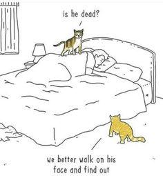 Yepp, the cat life