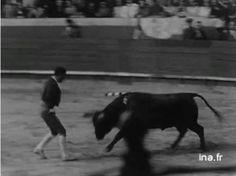 Pega. Olé Forcados Carne, Horses, Artist, Animals, Animales, Animaux, Artists, Animal, Animais