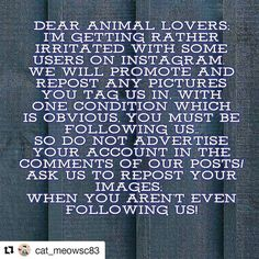 #Repost @cat_meowsc83  Going to repost this because clearly in 2016 nearly 2017 giving someone who's doing something nice for you respect isn't obvious lmao get off your high horse I can't deal with selfish uptight children on this app #Repost @cat_meowsc83  Dear Animal Lovers; I'm getting rather irritated with some users on Instagram.  We will promote and repost any pictures you tag us in with one condition which is obvious you must be following us.. So do not advertise your account in the…