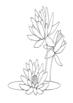 Water Lilies Coloring Page for Kids