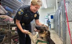 Dog Who Survived 5 Weeks On Highway Median Adopted By Officer Who Saved Her
