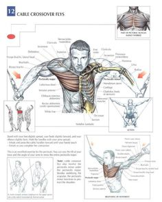 ANATOMY OF A WORKOUT - CHEST Workout Today's workout