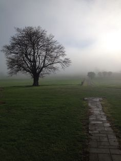 Fog April 2015