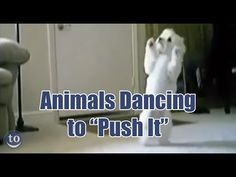 """...this video might just be the only version of """"Push It"""" you ever need. 