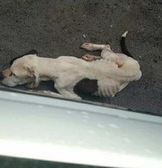 Emaciated dog discarded at dumping site in South Carolina