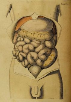 Plate XXI. Bowels _A System of the anatomy of the human body_...
