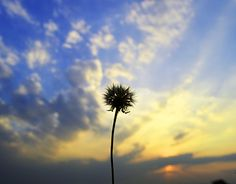 """Check out new work on my @Behance portfolio: """"Withered Dandelion and a Late Evening Sky"""" http://be.net/gallery/45881245/Withered-Dandelion-and-a-Late-Evening-Sky"""