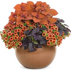 Fall Potted Plants, Fall Planters, Flower Planters, Ivy Plants, Garden Planters, Fall Flower Pots, Fall Flowers, Fall Containers, Succulent Containers