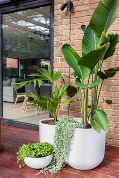 outdoor rooms A little greenery to brighten your day. The alfresco area of this project was planted with clusters of potted palms and birds of paradise for a tropical feel. Potted Plants Patio, Potted Palms, House Plants Decor, Indoor Plants, Plants On Deck, Plants Around Pool, Balcony Plants, Full Sun Landscaping, Garden Paths