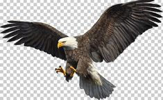 This PNG image was uploaded on October am by user: sefdesala and is about Accipitriformes, Animal, Animals, Bald Eagle, Beak. Background Wallpaper For Photoshop, Photo Background Images Hd, Studio Background Images, Eagle Artwork, Bird Artwork, Eagle Bird, Bald Eagle, Photography Logo Maker, Eagle Images
