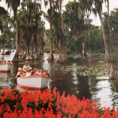 """Sightseeing boats glide through a wonderland of tropical beauty at  Florida's Cypress Gardens""."