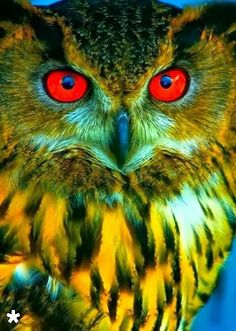 Beautiful owl / owl bet he knows he is handsome ? Beautiful Owl, Animals Beautiful, Cute Animals, Beautiful Pictures, Exotic Birds, Colorful Birds, Pretty Birds, Love Birds, Owl Pictures