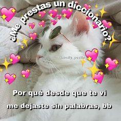 Diabetes Tattoo For Mom - - Diabetes Breakfast Ideas - Diabetes Type 1 - - Packaged Diabetes Snacks Cute Cat Memes, Cute Love Memes, Funny Love, Funny Memes, Romantic Memes, Memes Lindos, Tumblr Love, Love Phrases, Spanish Memes