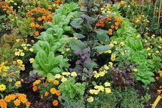 Garden Projects, House Design, Vegetables, Plants, Gardening, Food, Lawn And Garden, Essen, Vegetable Recipes