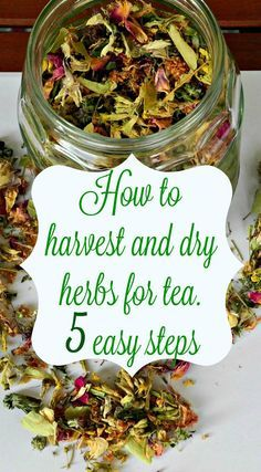 How to harvest and dry herbs for tea in 5 easy steps | www.gabriela.green